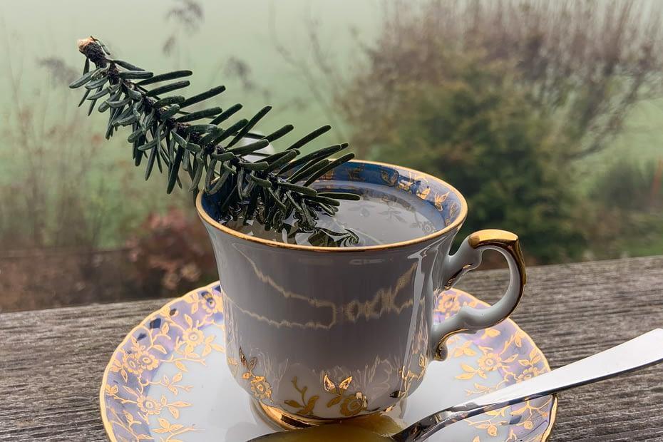 der Wald in der Tasse Tee